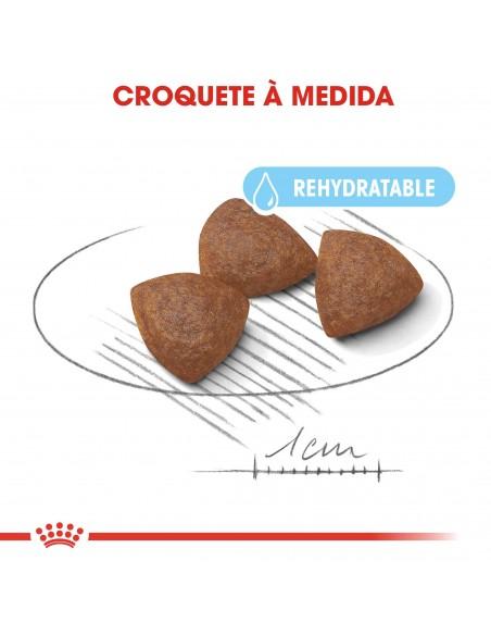 Royal Canin Size Health Nutrition Médium Starter Alimento Seco Cão