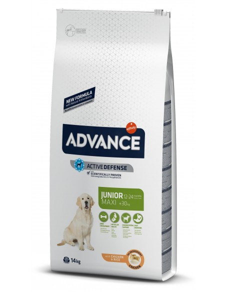 Advance Maxi Junior Alimento Seco Cão