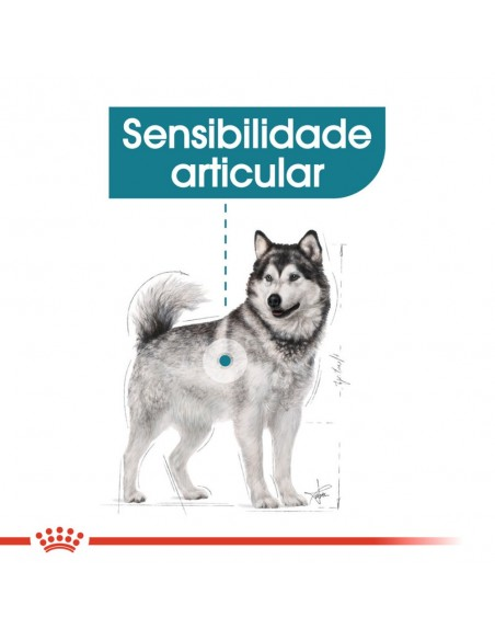 Royal Canin SHN Maxi Joint Care Alimento Seco Cão