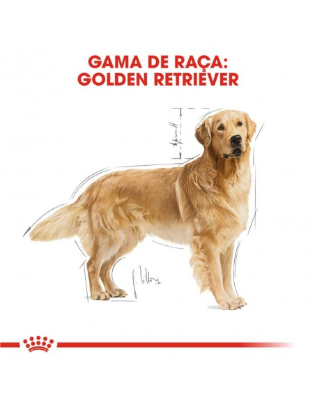 Royal Canin BHN Golden Retriever Adult Alimento Seco Cão