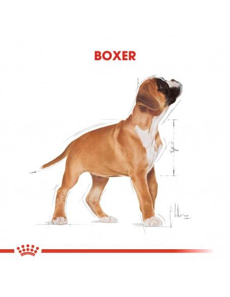 Royal Canin BHN Boxer Puppy Alimento Seco Cão