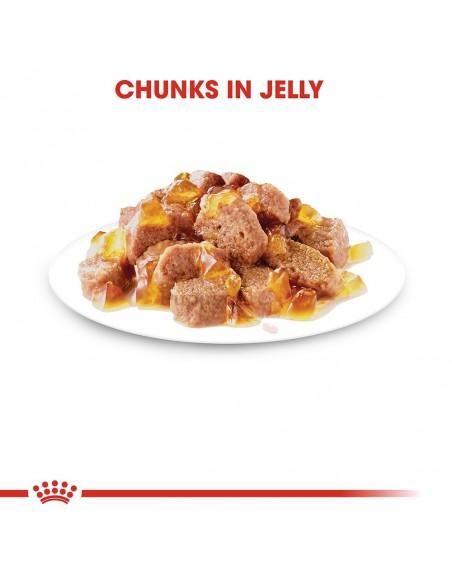 Royal Canin Ageing 12+ Alimento Húmido Gato Saquetas (Jelly)