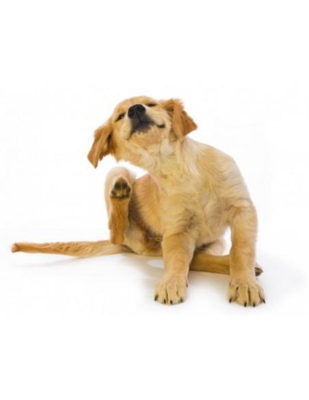 Desparasitantes para cães