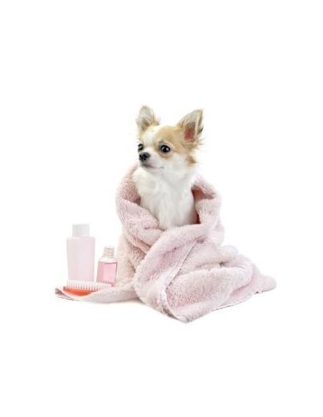 Higiene e beleza para cães