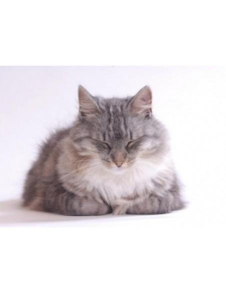 Suplementos e Vitaminas para Gatos